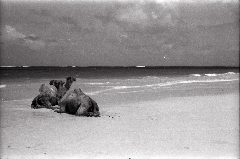 22. Dove mai manchi tuo cammello 1958 ca fotografia